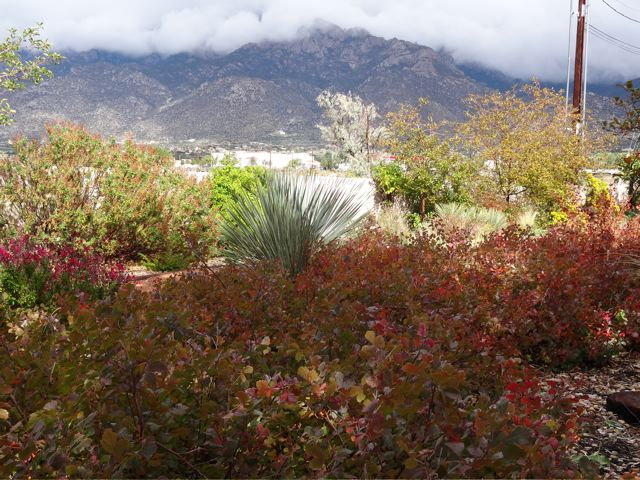North Albuquerque Acres Landscape Design NM