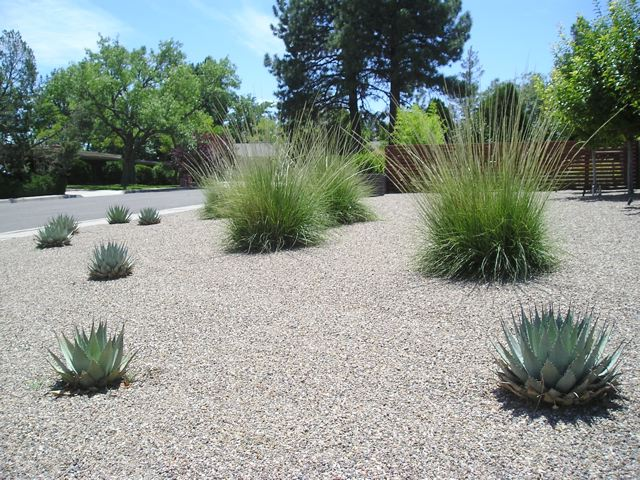 Mid century modern red twig studio landscape design for Landscaping rocks albuquerque