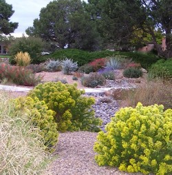 xeriscape design albuquerque nm