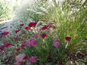 pomegranate yarrow